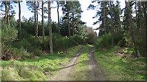 NJ1566 : Entering Spindlemuir Wood by Anne Burgess