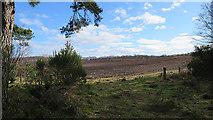 NJ1566 : Crookies Moss by Anne Burgess