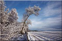 NH6454 : Field edge, Tullich Wood, Munlochy by Julian Paren