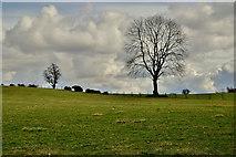 H5472 : A lone tree, Bracky by Kenneth  Allen