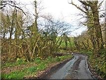 SS7316 : Sharp bend in Benley Wood by Roger Cornfoot