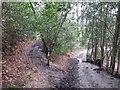 TQ5540 : Footpath and bridleway near Speldhurst by Malc McDonald