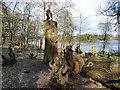 SJ8639 : Trentham Gardens: owl sculpture by Stephen Craven