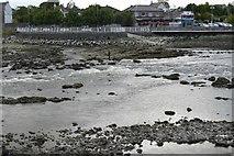 R5757 : Curraghgour Falls, River Shannon by N Chadwick