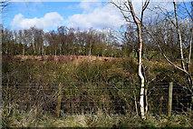 H5172 : Heathland, Cloghfin by Kenneth  Allen