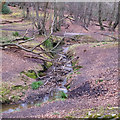 TQ4297 : Meanders in Epping Forest near Loughton by Roger Jones