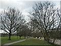SE1148 : Riverside trees, Ilkley by Stephen Craven