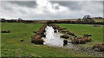 TQ1913 : Drainage channel near the west bank of the River Adur by Ian Cunliffe