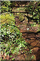 SX7982 : Stream and path, Greathill Copse by Derek Harper