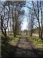NY6860 : South Tyne Trail by Oliver Dixon
