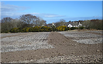 NJ9202 : Ploughed and Harrowed Field by Anne Burgess