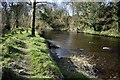 H4772 : Camowen riverbank, Mullaghmore by Kenneth  Allen