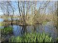 TQ5156 : Reflections at Sevenoaks Wildlife Reserve by Marathon