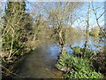 TQ5156 : River Darenth at Sevenoaks Wildlife Reserve by Marathon