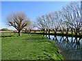 TL4355 : Grantchester Meadows: a bend in the Cam by John Sutton