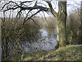 SE3423 : Woodland and water, Stanley Marsh local nature reserve by Christine Johnstone