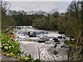 SE0188 : River Ure, Aysgarth Falls by David Dixon