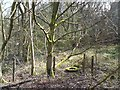 SJ9594 : Moss-covered tyre in Gower Hey Wood by Gerald England