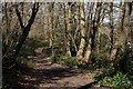 TQ3463 : Littleheath Woods by Peter Trimming