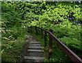 NT3194 : Steps along the Fife Coastal Path by Mat Fascione