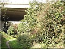 TQ5571 : Darent Valley Path under M25 by Sean Davis
