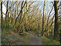 SE2536 : Path around the top of a former quarry by Stephen Craven