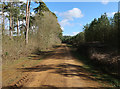 TL7890 : Track in Thetford Forest by Hugh Venables