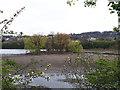 SE2533 : Island in Farnley reservoir by Stephen Craven