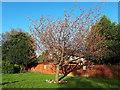 SE2733 : John Wilkinson's tree, Armley Park by Stephen Craven