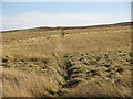 NY8744 : Grip on Wolfcleugh Common by Mike Quinn