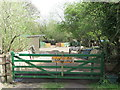 NZ3273 : Stable near the Beehive Inn, Whitley Bay by Geoff Holland