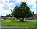 NY3459 : The village green, Beaumont by habiloid