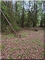 TF0820 : Two more fallen trees by Bob Harvey