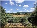 ST1333 : Overgrown field gate by Marika Reinholds