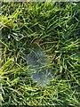 TF0820 : Dew on a web by Bob Harvey