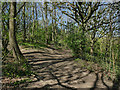 SE2235 : Path junction in the wooded part of Rodley Park by Stephen Craven