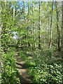SE3521 : Woodland path, Southern Washlands local nature reserve by Christine Johnstone