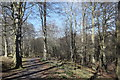 NJ8911 : Stoneywood woodland walk by Bill Harrison