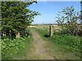 NZ3370 : Old Stone Gateposts, Murton Lane, Murton by Geoff Holland