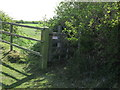 NZ3270 : Kissing Gate near Murton by Geoff Holland