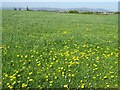 SO8843 : Dandelions and the Malvern Hills by Philip Halling