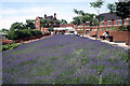 SU6352 : Basingstoke - Lavender beds by the railway station by Colin Park