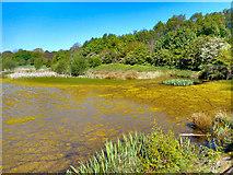 SJ7993 : Mersey Weir by Brian Frost