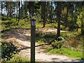 SK2883 : Mountain bike track in Lady Cannings' Plantation by Graham Hogg