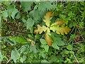 TF0820 : New oak tree by Bob Harvey
