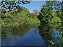 SE2635 : Kirkstall Valley Nature Reserve: river Aire by Stephen Craven