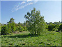 SE2634 : Kirkstall Valley Nature Reserve: meadow area by Stephen Craven