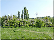 SE2634 : Kirkstall Valley Nature Reserve: orchard area by Stephen Craven