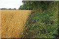 SO6288 : Bridleway to Cleobury North by Derek Harper