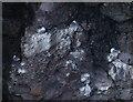 NO8879 : Kittiwakes in Trollochy by Hugh Venables